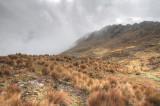 Machu Picchu Birding 11-01-2012