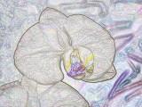 Crayon Sketch Orchid