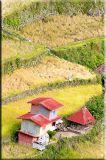 Red house harvest