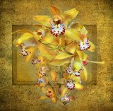 The Sultan's Orchid...