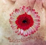 A flower's meditation...