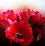 Passionate tulips...