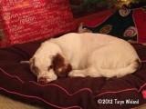 Mabel  waiting for Santa 121221 001.jpg