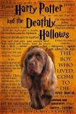 Harry Potter book cover 2b.jpg