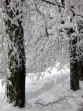 tissu de neige entre les arbres
