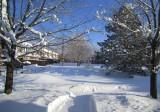 L'hiver est commencé dans la cour