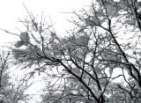 noir et blanc en couleur