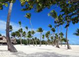 Cocotiers sur sable blanc
