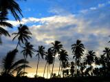 Aube derrière les cocotiers