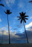 Deux cocotiers esseulés