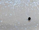 La noix qui roule sur la plage