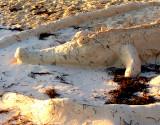 croco de sable
