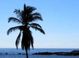 palmier sur mer