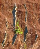 le buisson vert du synclinal