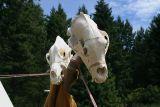 Bear Skull Lodge Adornments