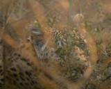 luipaard1.jpg