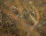 luipaard2.jpg