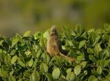mousebird2.jpg