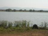 nijlpaard4.jpg