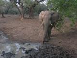 olifant6.jpg