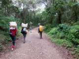 Porters heading up to Machame Camp