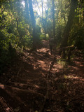 The trail from Mweka camp