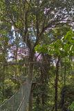 Canopy walk Gunung National Park