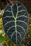 Single leaf plant
