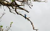 Kingfisher 2.jpg