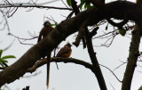 Bird 7.jpg