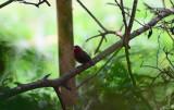 Bird 15.jpg