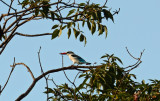 Kingfisher 3.jpg