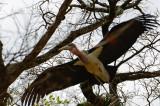 Stork 2.jpg