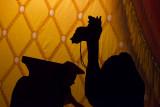 Arabian Night Fondy High School