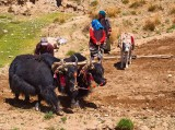 The Farmer with his Oxen