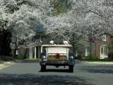 Spring comes to Washington, DC