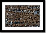 Tons of Okemo Boys or Penguin Chicks