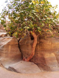Dsc00040 Lonely Tree.jpg
