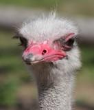 Cap Town Ostrich Farm