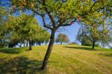 Between trees II