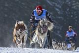 Sled Dog EC-2013