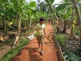 Banana grove