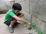 Found a millipede!
