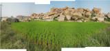 Hampi rice field (12 Nov 2012)