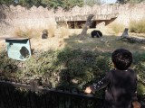 Black bear exhibit at the Delhi Zoo