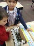 Growing silkworms in class!