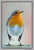 Birds at the feeding table. / Fugler på fuglebrettet