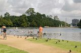 Hermann Park pond feeding pigeons 03