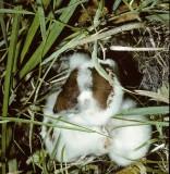Sporodinia grandis attacking basidiomycete University 15-9-82 HF