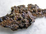 Resupinatus trichotis BestwoodCP 12-02 AW